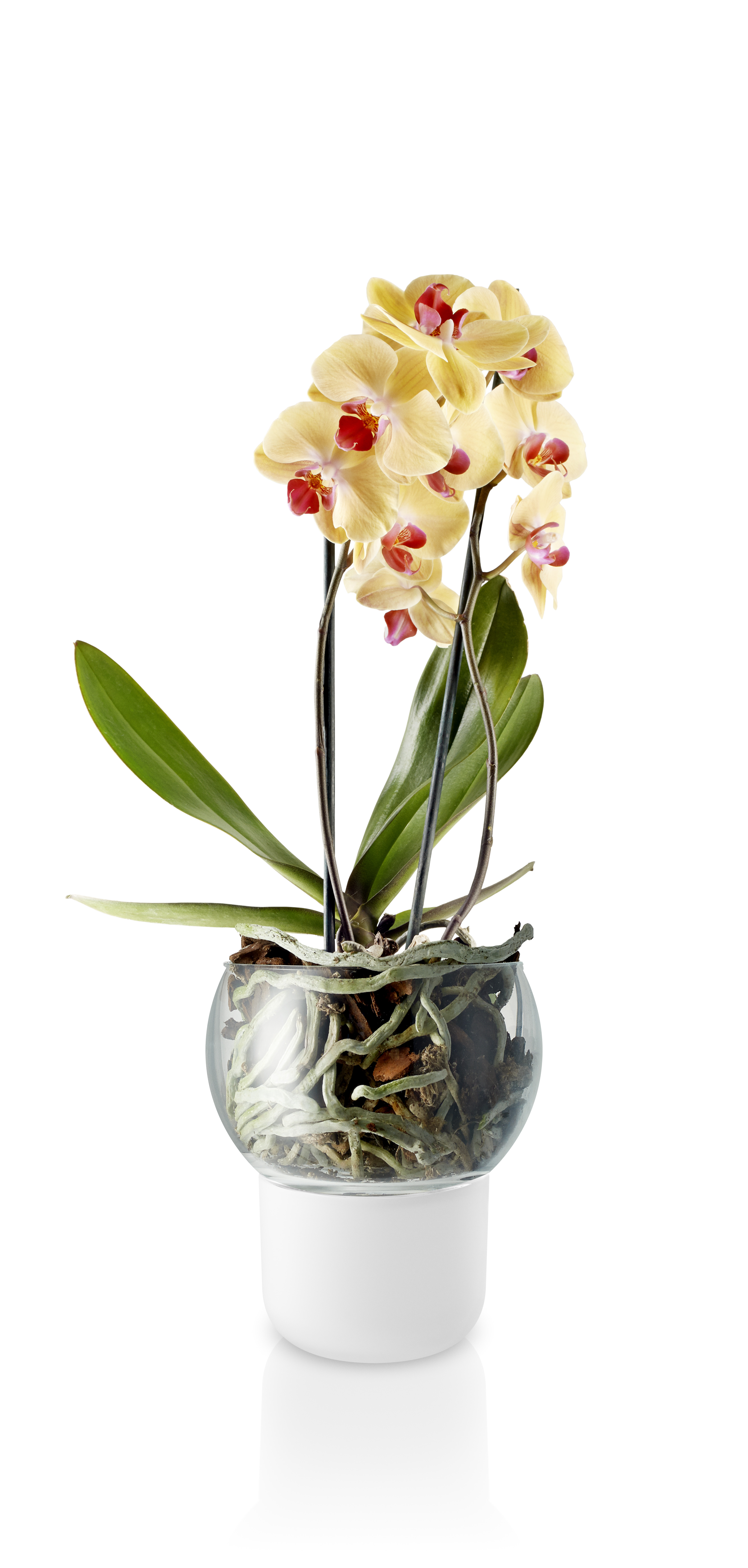 Orchid pot 15cm Frosted