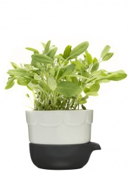 Green double-barelled growing pot, sage green