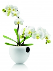 Orchid pot, white