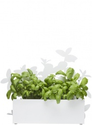 Form herb stand white