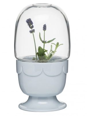 Greenhouse on foot with glasscover, lavender blue
