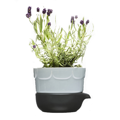 Double-barelled growing pot, blue